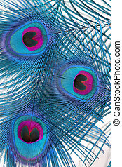 Peacock Feathers - Abstract in blue and red of three peacock...