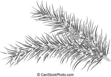 Vector illustration of silver fir b
