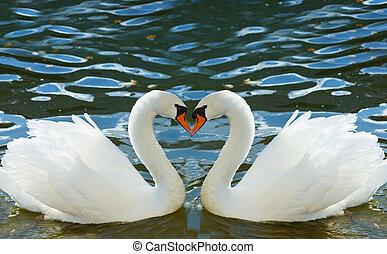 dos, cisnes, doblado, cuellos, forma, corazón