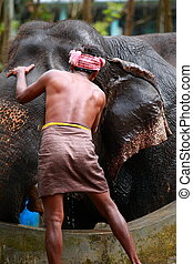 Man washing his elephant