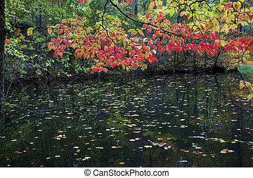 Fall Leaves Over Pond