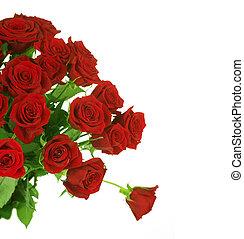 Red Roses border over white