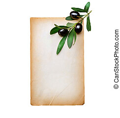 Blank Paper and Olive Branch isolated on white