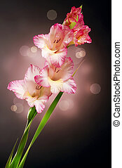otoño, gladiolo, diseño, flor