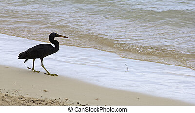 sea bird - closeup of a beach with a black sea bird
