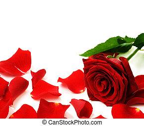 Red Rose & Petals Border
