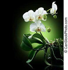 Orchid over black