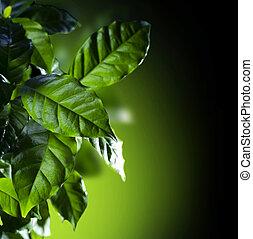 verde, hojas, café, Arabica, planta, aislado, negro
