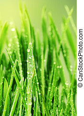 Fresh Grass with Waterdrops