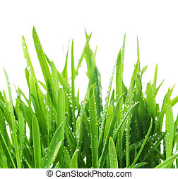 Fresh Grass Over White. With Water Drops