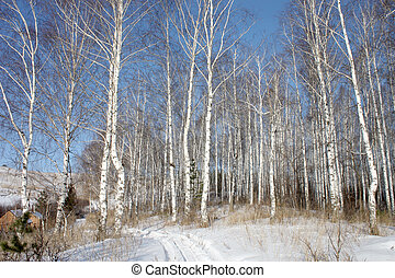 Winter landscape with birch forest