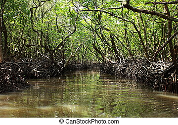 Mangrove tree in Havelock Island in Andamans, India