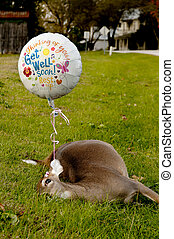 Get Well Soon - Deceased deer with a get well soon balloon