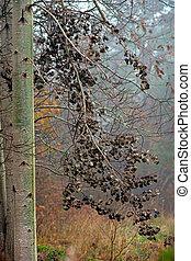 Aspen tree in autumn