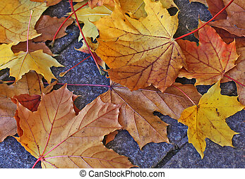 Autumnal fallen leaves - Yellow and orange fallen leaves on...