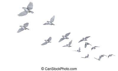 dove - image of dove