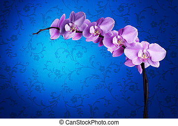 Beautiful Orchid Over Blue