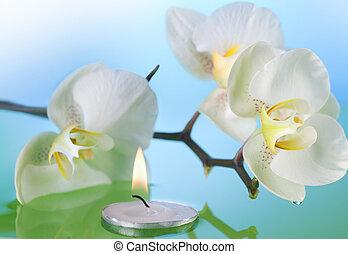 orquídea, e, queimadura, vela, em, água