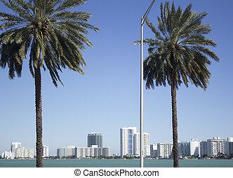 Miami Florida - palm trees and skyline in Miami Florida