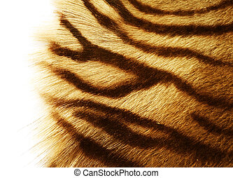 Tiger Skin Over White