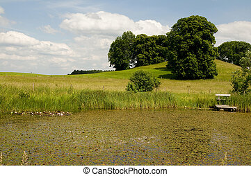 pond on the countryside