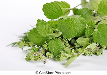 Mint and marjoram over white background closeup