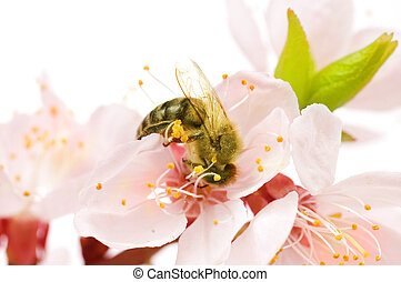 Honey Bee On A Flower. Studio Isolated