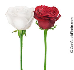 Couple of Roses. White & Red