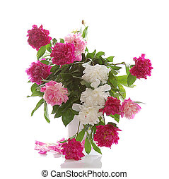 colorful peonies - bunch of colorful peonies isolated on...