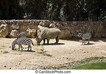 African animals - Open-air cage with african animals in the...