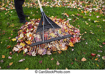 Cleaning up Yard during Autumn - Person holding yard rake...