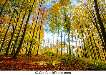 Colorful autumn forest - colorful autumn forest-his photo...
