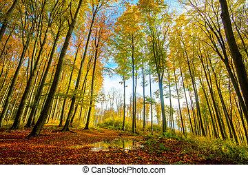 Colorful autumn forest - colorful autumn forest-his photo...