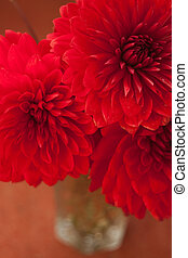 red dahlia flowers in the vaze - beautiful red dahlia...
