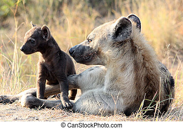 Mother and Baby Hyena - Taken in The Kruger National Park,...
