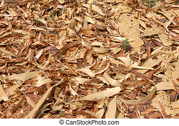 wood shavings - land is coated with film of wood shavings,...