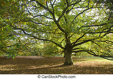 Autumn scene - Spreading tree in glorious colours at the...