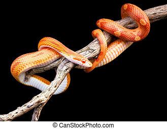 maíz, serpiente