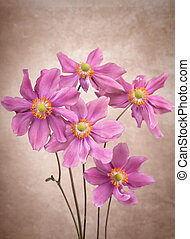 Anemone flowers on vintage background