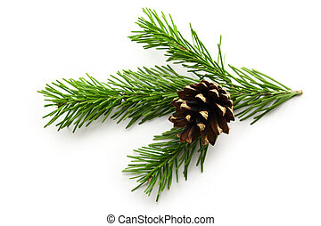 Twig of evergreen fir and cone