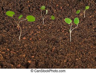Growing saplings