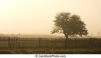 Lonely tree in fog - Old fence and lush tree in the mist