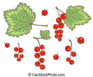 Red currants isolated on white. Vector set.