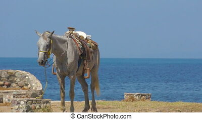 A Horse - A horse standing near the ocean with blue water in...