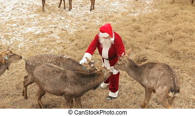Deer love Santa - Lovely deer surrounding Santa to eat...