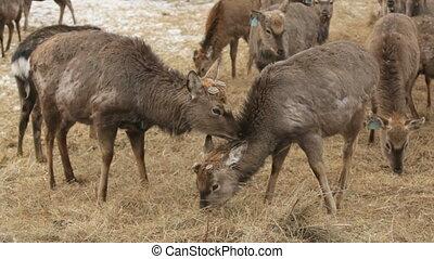 Deer family - Lovely deer family taking care of each other