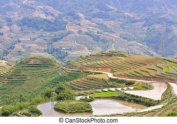 Rice terraced fields in Sapa, Vietnam