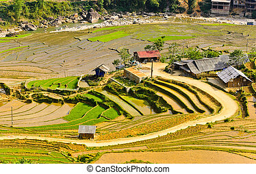Sapa rice terraced fields, Vietnam