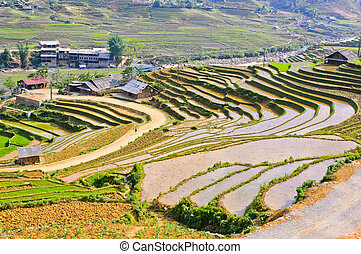 Sapa rice terraced fields in Hmong minority village, Vietnam