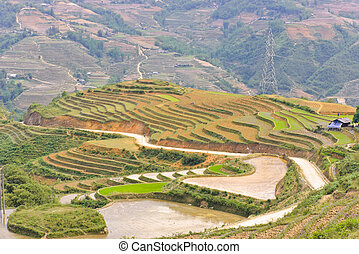 Sapa rice terraced in Northern Vietnam